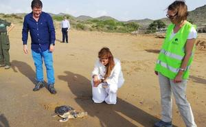 El Centro de Recuperación de Fauna libera dos ejemplares de tortuga boba