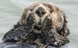 Las fotografías de animales salvajes más divertidas del año