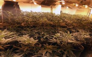 Desmantelan un cultivo de casi 200 plantas de marihuana en una casa de campo en Abanilla