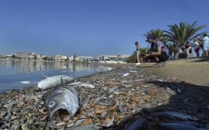 Luengo: «La situación es crítica; lo más grave que le ha pasado nunca al Mar Menor»