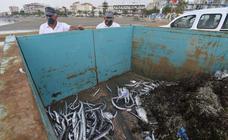 Siguen retirando peces muertos en San Pedro