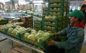 Más de 200 empresas de sectores hortofrutícola fresco y logístico se preparan ante el Brexit