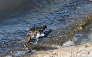 SEO/BirdLife sostiene que la DANA solo fue «la puntilla» para un humedal «ya agonizante por la dejadez política»