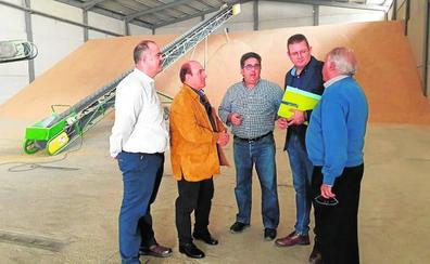 La producción de arroz en Calasparra ronda los 3 millones de kilos con un mayor control de las plagas