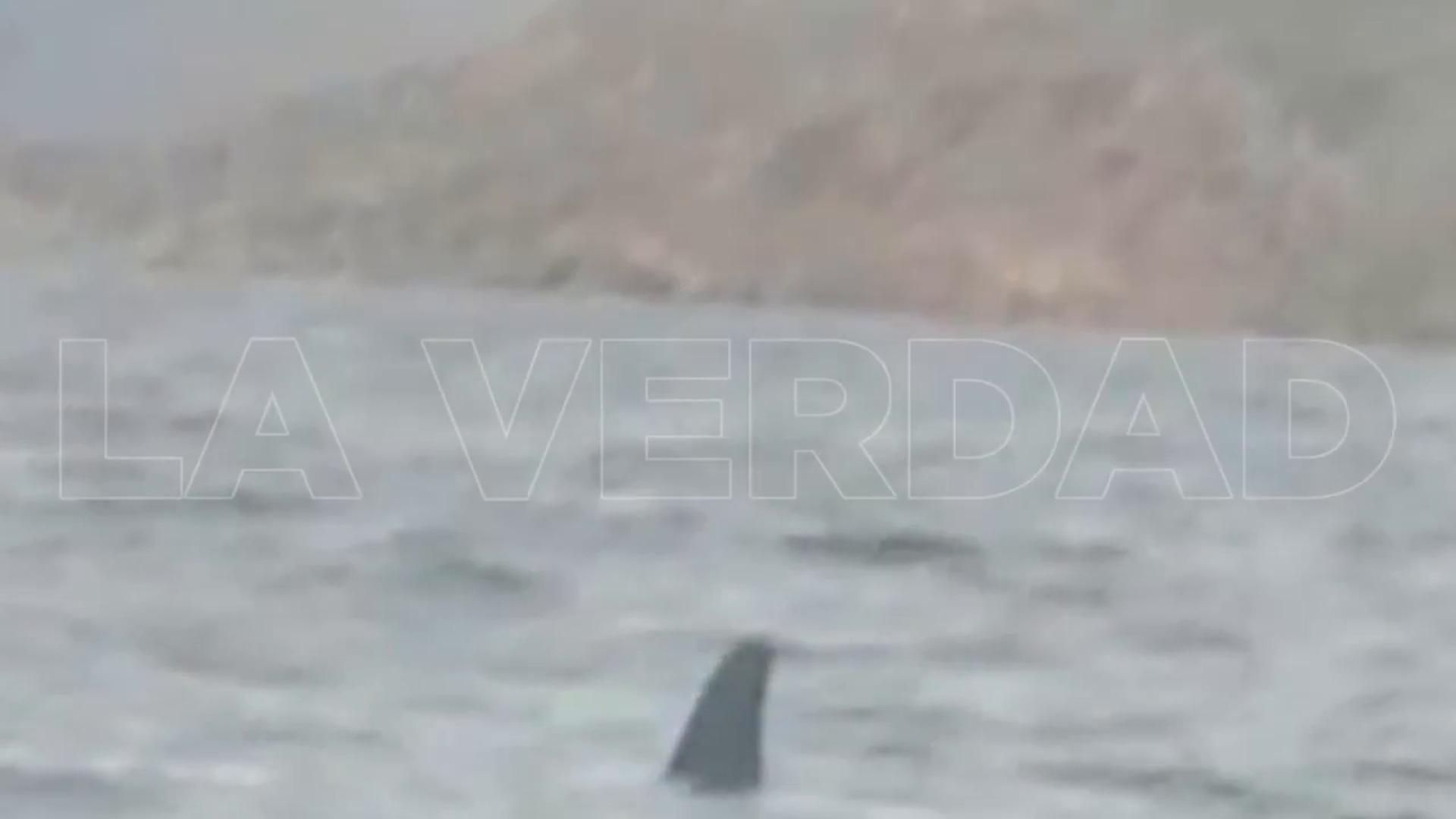 Aparece dos orcas en la costa de Cartagena