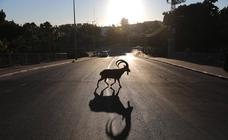 Los animales toman las calles