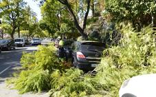 Caída de árboles y ramas en varios municipios de la Región