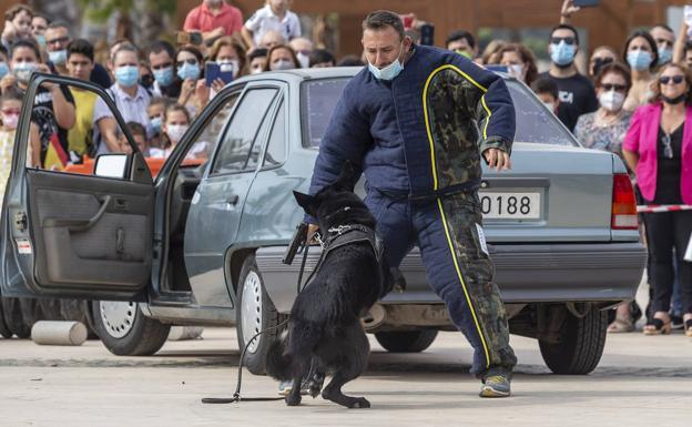 Anti-terrorist dog show in Cartagena this Tuesday.