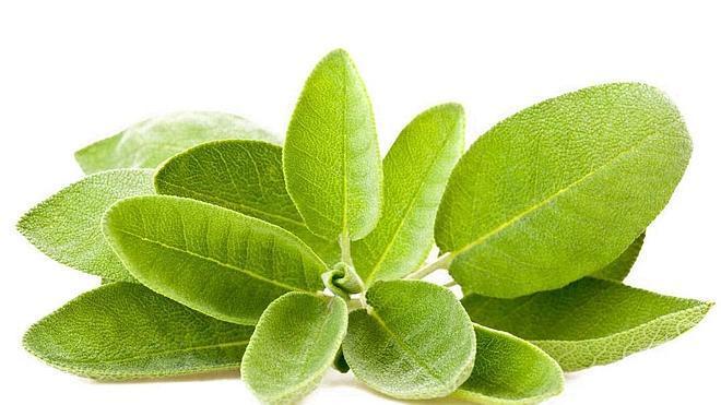 Plantas para aliviar los dolores menstruales