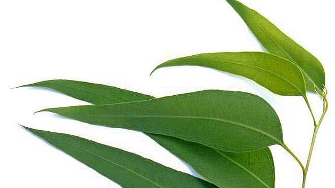 Plantas contra la faringitis y el dolor de garganta