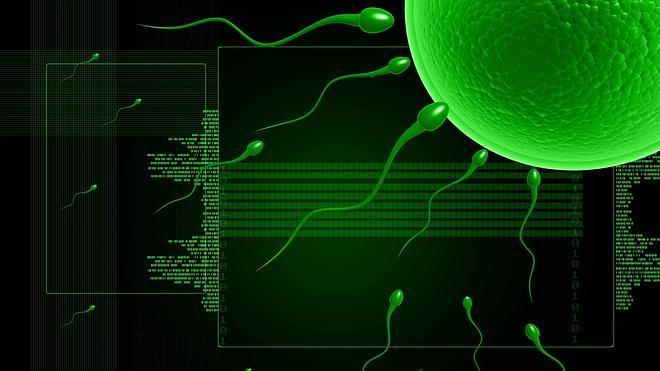 Hallan en animales la molécula clave para la fecundación del óvulo