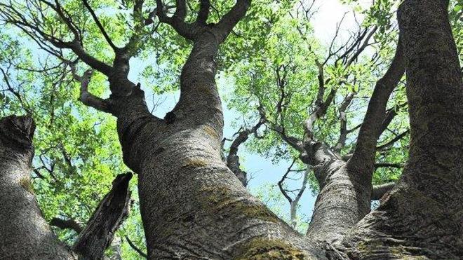 De tronco en tronco