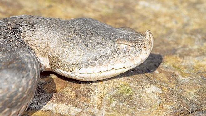 Serpientes, asignatura pendiente