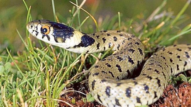 Serpientes, las olvidadas de la biodiversidad