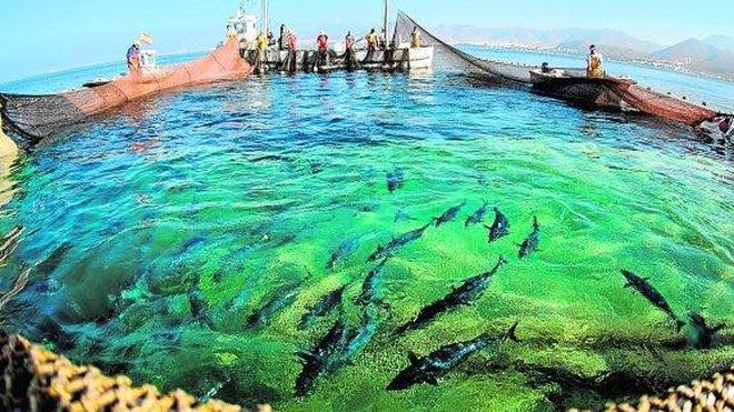 Columbares y la UMU promueven el uso sostenible y la conservación del mar