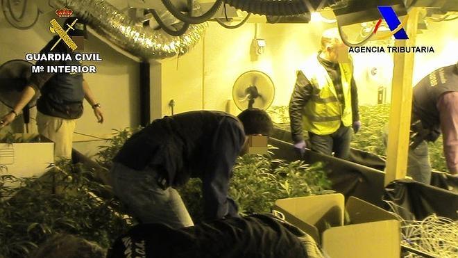 Detenidos por cultivar marihuana a gran escala para su venta en Holanda